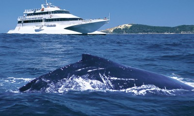 Whale Watching Day Cruise