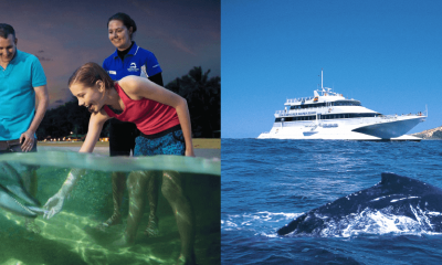 Premium Dolphin Feeding Day Tour & Whale Watch